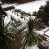 Лондонский снег