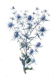 Ботаническая иллюстрация в интерьере